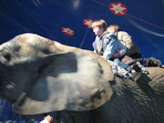 ritt auf einem Elefanten